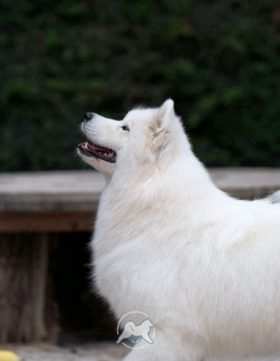 Nice Snow Girl of Sparkling Starlight