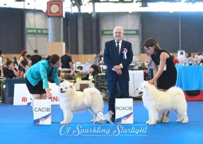 Samoyède Of Sparkling Starlight - Grand Prix de France 2019